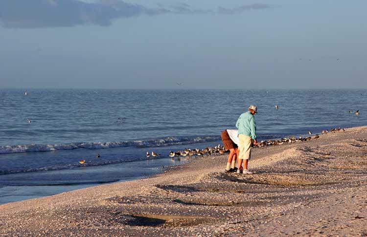 couple collecting seashells
