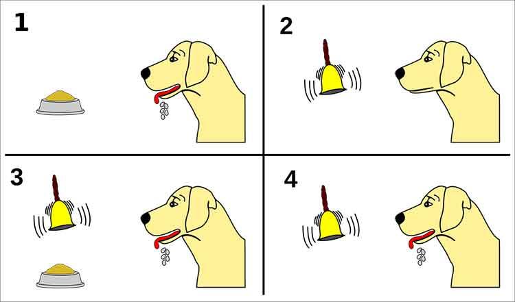 Pavlovs dog conditioning
